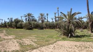 Très beau terrain dans la palmeraie de Marrakech